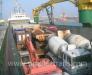 Marine transportation of wheeled vehicles.
